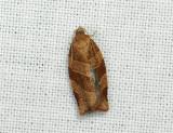 1317   Pandemis cinnamomeana  306.jpg