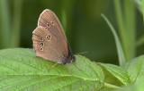 Butterflies & Moths of Sweden