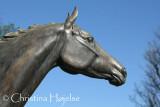 Horse Racing 2011