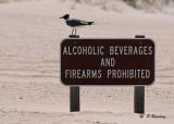 Beach signs:  SERIES