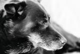 7. jun, tuesday    Lola in memoriam