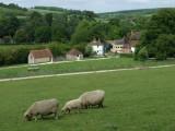Weald and Downland Museum Singleton Sussex