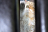 Catman's protest