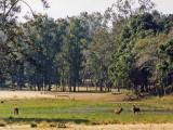 Kanha meadow