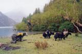 Campsite, Phoksumdo khola