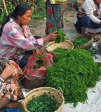 Mekong riverweed