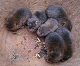 Small furry animals