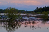 Marsh on the Sudbury river