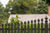 Sunflowers at Mount Vernon