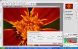 CaptureNX resizing.jpg