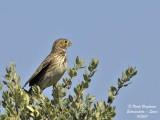 Other birds 'species seen in Extremadura