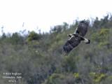 Birding in Extremadura and Monfragüe Park - Andalucía, Sierra de Cazorla, Segura y Las Villas - April 2012