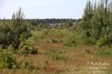 Pine forest edge