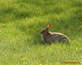 Rabbits 03537 copy.jpg