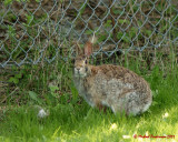 Rabbits 03540 copy.jpg