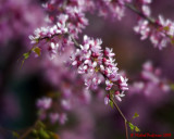 Flowers 08737 copy.jpg