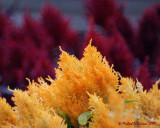 Flowers 09248 copy.jpg