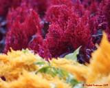 Flowers 09250 copy.jpg