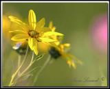 Fleurs et Plantes - Plants