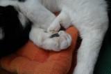 her solft feet.jpg