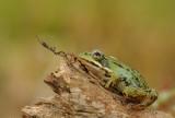 Amfibieën-amphibians en Slangen-Snake