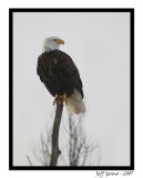 eagle5.jpg