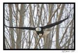 eagle3.jpg