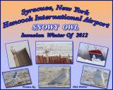 Snowy Owls At Syracuse, New York's International  Hancock Airport Gallery