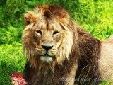 Chester Zoo 2011