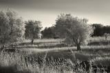 Trees & Field