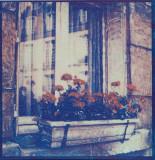 Paris Windows (Tri-color gum)