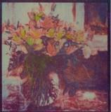 Govenor's Flowers  (Tri-color gum)