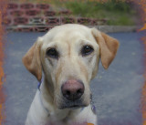 Molly 1996-2008