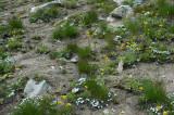 Flowery Dirt