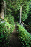 Christine Trail