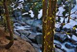 Creek & trees