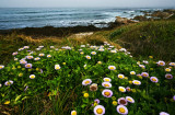 Blooming by the sea