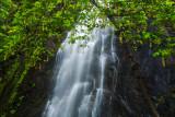 Waterfall & tree