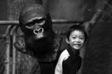 Hayden & gorilla