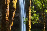 Trees and the falls