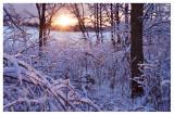 Winter woods sunset