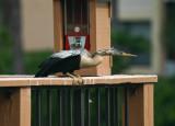 Wild Birds ~ Florida