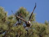 2-17-11 1142 female take off.jpg