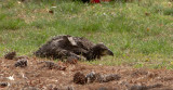 4-21-11 2003 1st chick down.jpg