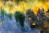 fallen leaves of golden aspen