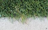 2011_08_26 God  Bless the Grass