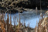 IMG_1193 First Ice, near beaver dam