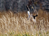 IMG_1198 NEODHS (North end of Deer Heading South)