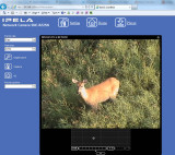 Deer on web-camera on July 27, 2012