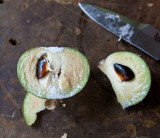 Fruit split open showing seeds. Manilkara zapota IMG_2350.jpg
